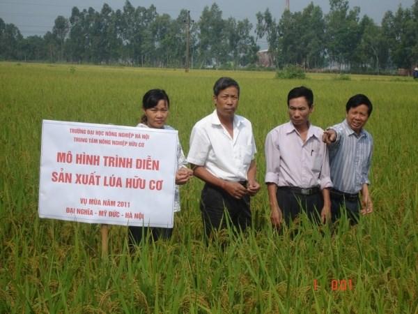 Mô hình trình diễn sản xuất lúa hữu cơ