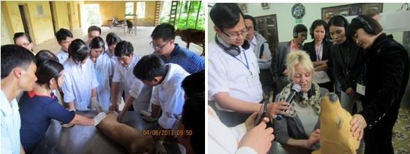 Training at Veterinary Teaching Hospital