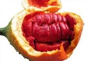 Công nghệ sản xuất đồ uống tự nhiên giàu carotenoid
