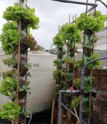 Hình 3. Thiết kế trụ trồng rau tưới tự động
