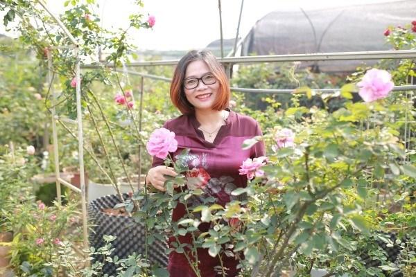 Bà Lê Thị Thu Hằng – Cựu sinh viên VNUA (Khóa 50), chủ cơ sở sản xuất hoa hồng gồm 600 giống trên diện tích 6ha