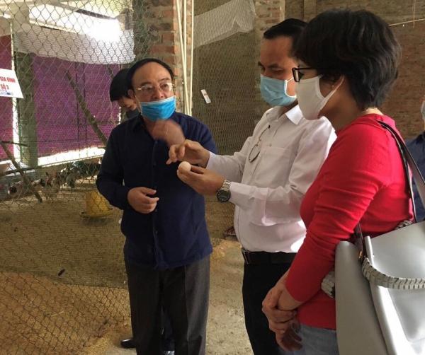Học viện Nông nghiệp Việt Nam chọn tạo gà Mía tiến vua bằng công nghệ tìm gen