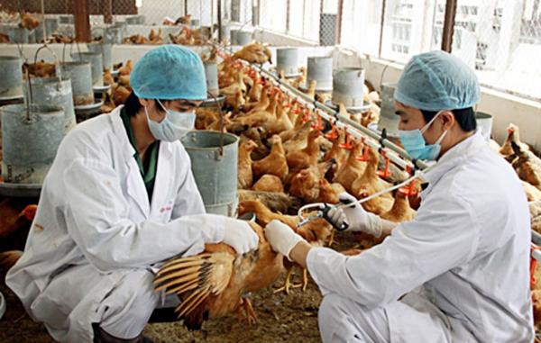 Cơ hội việc làm của ngành chăn nuôi tương đối lớn khi có nhiều doanh nghiệp đầu tư vào lĩnh vực này.
