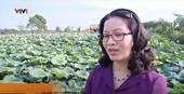Trung tâm bảo tồn Sen - Học viện Nông nghiệp Việt Nam