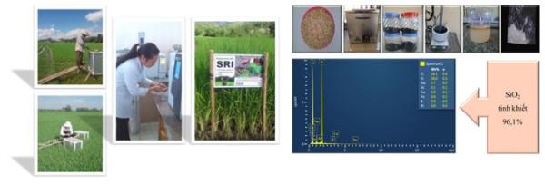 Sinh viên với các nghiên cứu trong lĩnh vực phát thải trong nông nghiệp và chế tạo vật liệu từ phế phụ phẩm nông nghiệp