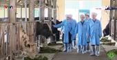 Học viện Nông nghiệp Việt Nam Phối hợp cùng doanh nghiệp cung cấp giống bò 3B