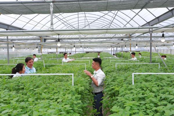 Sinh viên tham gia nghiên cứu tại mô hình sản xuất khoai tây giống sạch bệnh bằng công nghệ khí canh tại Học viện Nông nghiệp Việt Nam