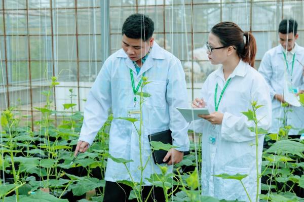 Một tiết học thực hành trồng cây không đất của sinh viên