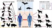 Cần làm gì để đảm bảo an toàn cho thú cưng trong dịch COVID-19