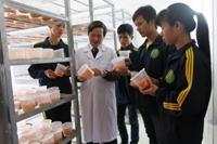 Nấm ăn và nấm dược liệu – Chuyên ngành có tính ứng dụng cao