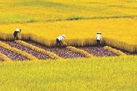 Nông nghiệp Việt Nam Những vấn đề tồn tại