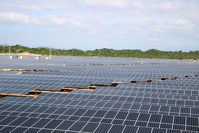 Tỉnh Ninh Thuận muốn xây dựng mô hình trồng trọt, chăn nuôi dưới pin năng lượng mặt trời