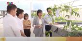 Công nghệ trồng cây không đất