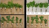 Một số kết quả nghiên cứu ứng dụng công nghệ nano trong trồng trọt tại Học viện Nông nghiệp Việt Nam