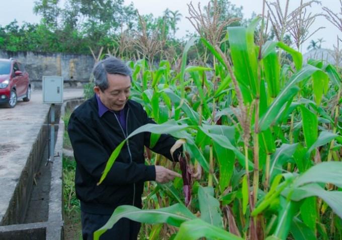 GS.VS. Trần Đình Long - Chủ tịch Hội Giống cây trồng Việt Nam đánh giá mô hình sản xuất hạt thương phẩm trên đồng ruộng