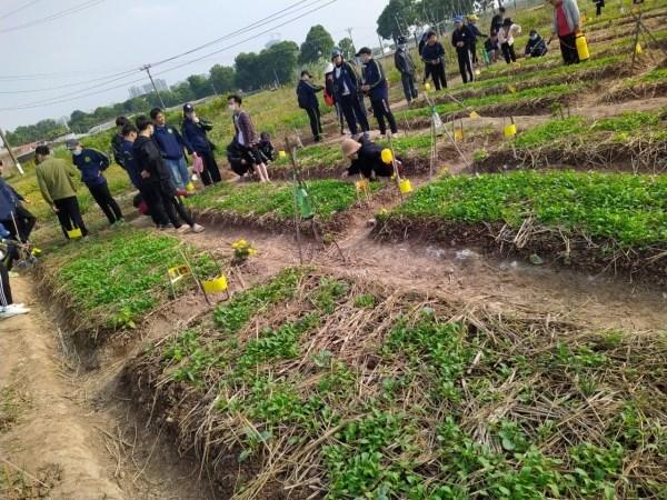 Quan sát hệ sinh thái đồng ruộng tại ruộng rau hữu cơ