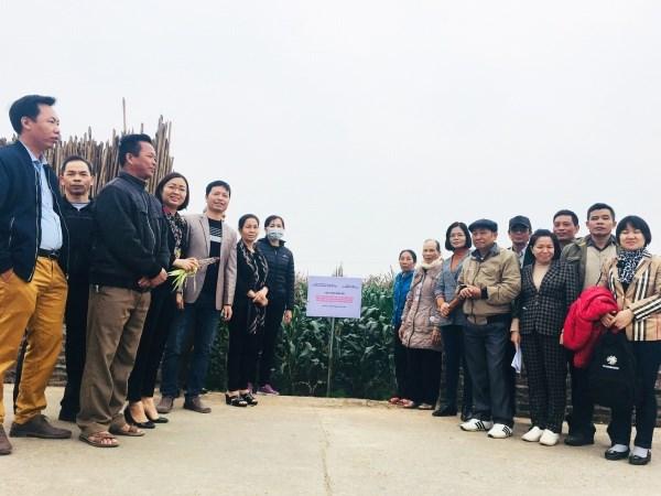 Hình ảnh thăm quan mô hình sản xuất thử nghiệm giống ngô nếp tím VNUA141 tại xã Song Phương, huyện Hoài Đức