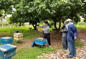 Hình thành tổ chức trung gian đầu tiên thúc đẩy chuyển giao công nghệ trong nông nghiệp