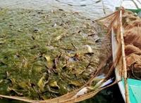Ngành nuôi trồng thủy sản học gì Cơ hội việc làm lương cao