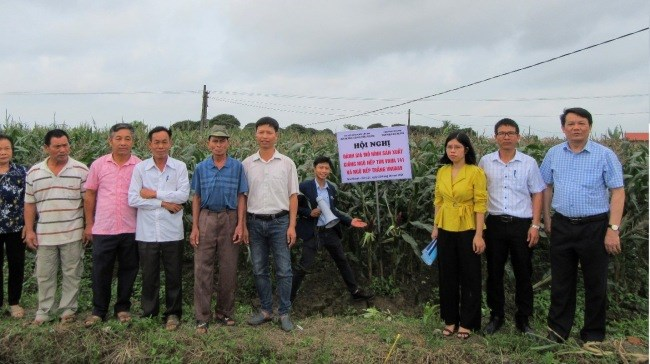 Mô hình sản xuất giống ngô nếp tím giàu anthocyanin VNUA141 trong vụ Xuân năm 2021 tại xã Gia Khánh, huyện Gia Lộc, tỉnh Hải Dương