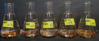 Nhóm nghiên cứu Khoa học cây trồng nghiên cứu thành công đề tài Biểu hiện hình thái và kiểu gen liên quan đến tính chống chịu thiếu hụt oxy vùng hạt trong điều kiện nhiệt độ khác nhau