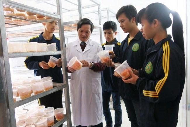 TS. Ngô Xuân Nghiễn hướng dẫn sinh viên thực hành nuôi trồng nấm Đông trùng hạ thảo