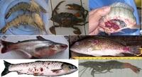 Bệnh học thủy sản - ngành học được đánh giá cao