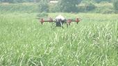 Ứng dụng công nghệ cao máy bay không người lái trong sản xuất nông nghiệp