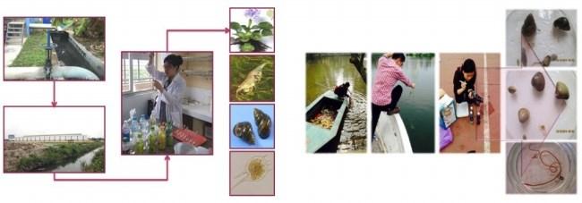 Sinh viên với các nghiên cứu trong lĩnh vực chỉ thị sinh học môi trường