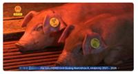 Đột phá nghiên cứu kháng tự nhiên với dịch tả lợn châu Phi