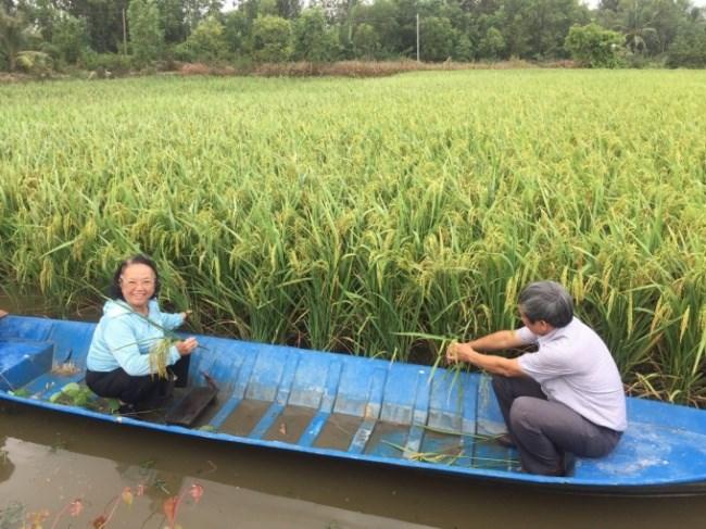 Lai thơm 6 trên đất lúa - tôm vụ thu đông 2019 ở xã Hồng Dân, huyện Phước Long, tỉnh Bạc Liêu.