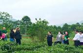 Đoàn Đại sứ quán Ireland thăm quan thực địa mô hình làng nông thuận thiên trên địa bàn tỉnh Yên Bái