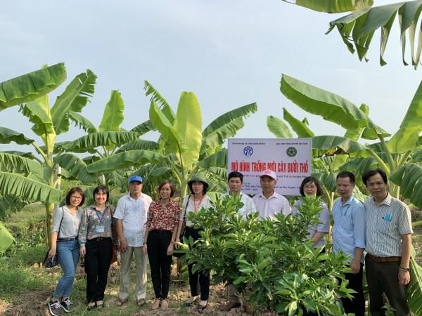 Mô hình trồng mới 3ha bưởi Thồ tại huyện Phú Xuyên, Hà Nội