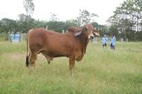 Ngành Chăn nuôi, tiềm năng phát triển và cơ hội nghề nghiệp