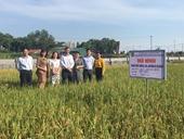 """Đánh giá, nghiệm thu kết quả thực hiện cấp cơ sở nhiệm vụ """"Chọn tạo giống lúa japonica phù hợp với chế biến dầu cám gạo tại Việt Nam"""""""