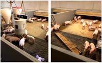 Thực tập sinh tại Đan Mạch với ngành Chăn nuôi - Thú y