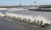 Nhu cầu nhân sự lớn cho ngành Thủy sản