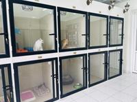 Học viện Nông nghiệp Việt Nam- Bệnh viện Thú y – Khách sạn chó mèo- nơi bảo vệ an toàn cho thú cưng hỗ trợ công tác phòng chống Covid-19