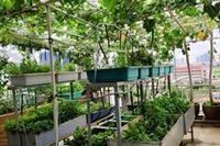 Tìm niềm vui trong bối cảnh giãn cách xã hội do bệnh dịch Covid-19 với phát triển rau hoa quả và cảnh quan