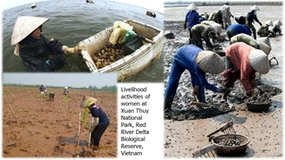 Climate Change Adaptation of Women and Children in Red River Delta Biological Reserve, Vietnam