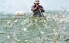 Ngành Nuôi trồng thủy sản là gì   