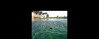 Cơ hội việc làm khi học ngành Nuôi trồng thủy sản