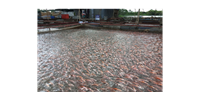 Những nội dung trong Luật Chăn nuôi có liên quan đến hoạt động sản xuất thủy sản