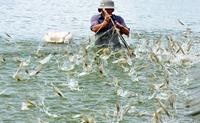 Hệ số chuyển đổi thức ăn FCR trong nuôi cá, tôm