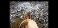 Xây dựng ngành thủy sản hội nhập, phát triển bền vững và có trách nhiệm