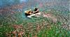Phê duyệt Kế hoạch quốc gia phòng, chống dịch bệnh nguy hiểm trên thủy sản giai đoạn 2021 – 2030