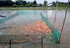 Những điều cần biết về công việc của Kỹ sư ngành Nuôi trồng thủy sản