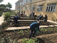 Hướng dẫn kỹ thuật xây dựng vườn rau dinh dưỡng hữu cơ vụ thu đông tại Trường Tiểu học Tống Phan