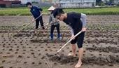 Sinh viên ngành Khoa học cây trồng tham gia thực tập nghề nghiệp tại cơ sở