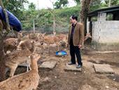Chăn nuôi hươu Sao trên thế giới và trong nước